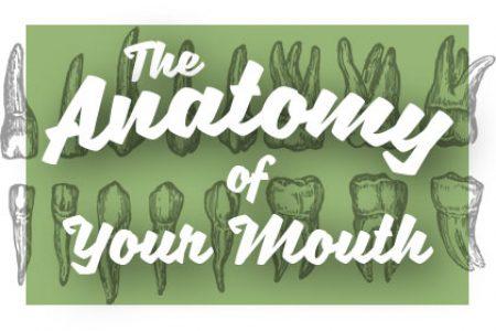 Oral-Anatomy